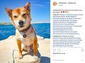 Dvojica zobrala svojho psíka aj na dovolenku do Chorvátska. Veterinár im totiž odporučil morský vzduch, ktorý by chorému chlpáčovi mohol pomôcť.