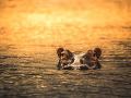 Nebezpečný hroch v Keni pripravil o život nič netušiaceho čínskeho turistu