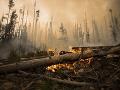 Ohnivé peklo pustoší aj Austráliu: Na východnom pobreží hasiči bojujú s viac než 70 požiarmi