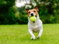 Slováci, POZOR: Od soboty už zviera nemá byť vecou, psy musia byť čipované
