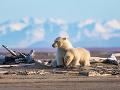 Dedinka na Aljaške zažíva turistický boom, dôvodom sú ľadové medvede