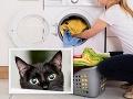 Traumatický zážitok: Žena omylom oprala mačiatko! O pár dní zažila ešte väčší šok