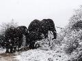 Sneženie v Južnej Afrike