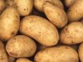 Poľnohospodári v Nemecku bijú na poplach: Extrémne sucho sa podpísalo na nízkej úrode zemiakov