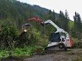Hospodárenie v lesoch musí byť transparentnejšie, tvrdia analytici