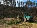 Príroda Vysokých Tatier sa po kalamite spamätala: Zvládne to aj sama, povedal Sólymos