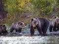 Medvedia tlupa chystala útek z českej zoo: Pri plote si vyhĺbili nory, šéfka pozná vinníka