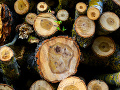 Veľká hanba pre celú krajinu: V Slovenskom krase sa turisti pýtajú, prečo sa tam ťaží drevo