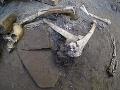 FOTO Šokujúci objav v Pompejach: Našli pozostatky piatich ľudí, zahynuli tragickou smrťou