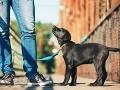 Ochranári žiadajú úplný zákaz strieľania zabehnutých psov