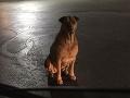 Pes sa stal celosvetovým hitom: Predstiera, že je túlavý, aby mu ľudia dávali hamburgery