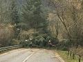 Vietor vyvracia stromy v Jasnej