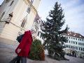 Vianočný stromček v Bratislave