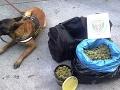 Čech prevážal marihuanu, na Slovensku ich vypátral služobný pes.