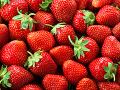 Veľká sladká lúpež v Nemecku: Zlodeji za noc vyplienili celé jahodové pole