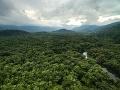 Amazonský prales je na pokraji svojej existencie, varujú vedci: Z ich predpokladu behá mráz po chrbte