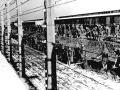Bol súčasťou vražednej mašinérie: Dozorca z koncentračného tábora napomáhal pri 5 230 vraždách
