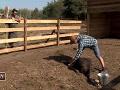 O zranení jedného zo pštrosov bol veterinár okamžite informovaný. Zachrániť sa ho však nepodarilo.