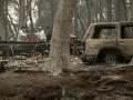 Situácia vo vyhorených lesoch
