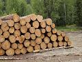 Lesy SR sú ochotné znížiť ťažbu v okolí Bratislavy: Nebude to však zadarmo