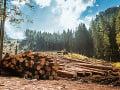 Starostovia obcí upozorňujú: Lesy SR porušili dohodu o obmedzenom výrube