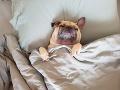Veterinár vyvracia najväčší mýtus: Psy v zime trpia, majitelia ich tak vystavujú obrovskému riziku!