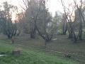 Obyvatelia bratislavského sídliska, buďte v strehu: Vyčíňa tu staronová hrozba