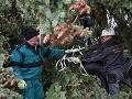 Vianočný stromček v Košiciach