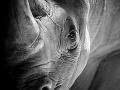 Šokujúci nález v Juhoafrickej republike: Pytliaci mali pri sebe desiatky nosorožích rohov