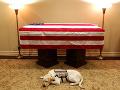 Labradorský retríver Sully odpočíva pri rakve svojho pána.