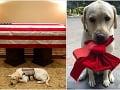 Vernosť až za hrob: FOTO Pes G. Busha (†94) dojal celý svet, po odchode pána ho čaká ďalšia misia