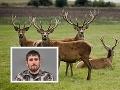 Pytliak David (29) odrezával jeleňom hlavy: Za ohavné činy zvolil sudca nečakaný trest