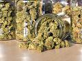 Poriadny úlovok polície v Kolumbii: Zhabali obrovské množstvo marihuany, nezvyčajný úkryt