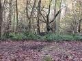 Žena venčila psa, ten zavetril orgie: Sex uprostred lesa, ale to nie je to najhoršie!