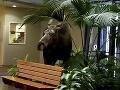 Veľké mrazy priviedli do nemocnice nečakaného návštevníka: Fyzioterapeutka ho nakrútila na VIDEO