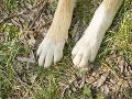 Dávajte si pozor na svojich štvornohých miláčikov: Posypová soľ je nebezpečná pre psie labky