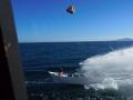 Ochraňujú prírodu, stali sa terčom rybárov: VIDEO Drastický útok kameňmi a ohňom