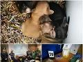 FOTO Alena a Ján rozbehli podvodný biznis v Taliansku, jeden kšeft im vyniesol tisícky eur!