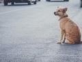 Strašný prípad v susednom Rakúsku: Opitý Slovák zneužíval na žobranie psa