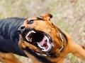 Chlapec (4) sa chcel iba pohrať: Agresívny pes mu však odhryzol ruku