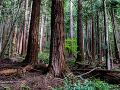 My sme les žiadajú zrušenie chemických postrekov v lesoch: Riskujú nielen ľudské zdravie