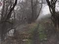 Mladík v lese nakrúcal