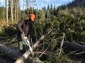Lesný hospodár nepovolene zrezal stovky kusov drevín: Za krádež mu hrozí dvojročné väzenie