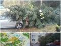Na Slovensku udrel orkán: FOTO Desaťtisíce ľudí nemajú elektrinu, vyvrátilo aj stromy, VÝSTRAHY