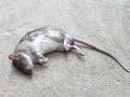 Rozsiahly zásah na arcibiskupskom úrade: V podozrivej obálke našli mŕtvu myš