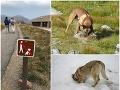 Nečakaný zákaz v Tatrách: FOTO Správa TANAP-u čelí ostrej kritike, pes už nesmie do prírody?!