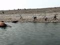 Záchranná akcia sa zvrhla na horor: VIDEO Medveď zaútočil na muža, boj o život vo vode