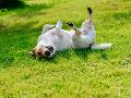 Zákaz držať psa na reťazi postihuje podľa Simona psičkárov, Antošová to vylúčila