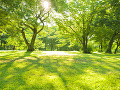 Bratislava dostala pokutu za zabezpečenie starostlivosti o zeleň, reaguje aj bývalý primátor