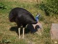 Smrť ako z hororu: Chovateľa zabil jeho vlastný vták